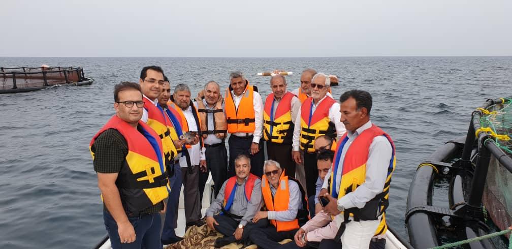 بازدید مدیر عامل جهاد نصر کرمان ومدیر عامل بانک رسالت از پرورش ماهی در قفس قشم